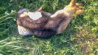 Ребенок увидел как в глубокой яме лежала умирающая собака На ее шее была удавка и ранены оба глаза