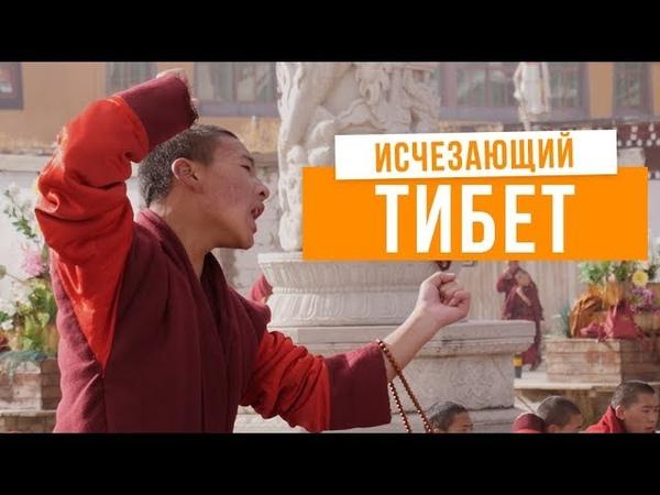 Я познакомился с живым Буддой Как люди живут в тибетских монастырях Тибет