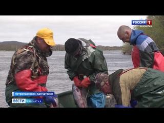 В Карагинском районе разрешат увеличить вылов горбуши || Вести-Камчатка
