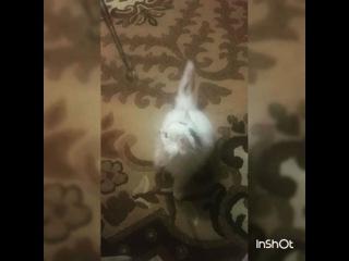 nastyusha__l video