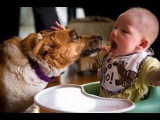 Дети и животные 2015 ОЧЕНЬ смешно! Kids and animals 2015 VERY funny!