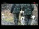 Особенности охоты на Руси. Охота на енотовидную собаку и кабана в Псковской обла
