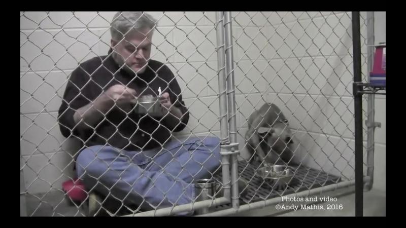 Ветеринар который спас бездомную собаку Грейси
