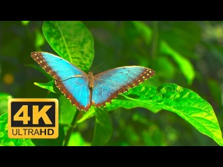 Life Untouched HDR10 UHD 4K Demo (60 FPS)