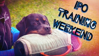 Schutzhund IPO Defence Protection training weekend South Valley Dog Sports Club GSD Mali Rottie