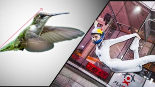 What Can Hummingbirds Teach An Indoor Skydiver?