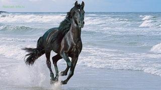 Мой друг, мой конь - Архиерейский хор Нижегородской епархии (Трофимов)