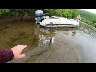 Ловля на воблер 80 мм от Mr. Musurok Хабаровский край, река Нельма
