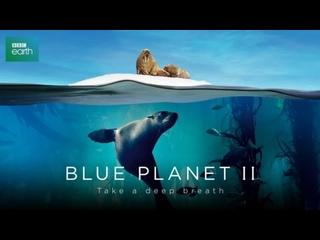 Голубая планета 2: 4 серия. Большая синева / Blue Planet II (2017)