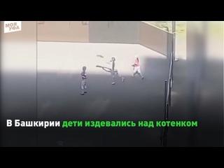 В Башкирии дети издевались над котенком
