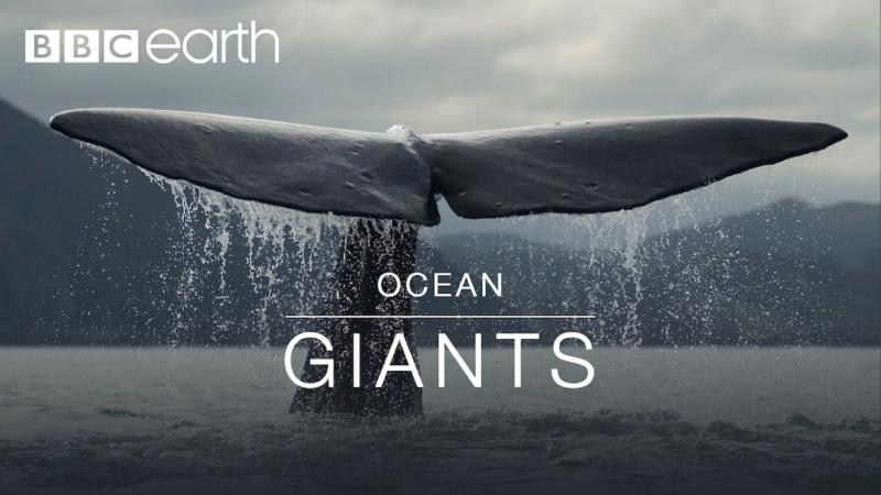 BBC Earth Ocean giants 3 серии 2011