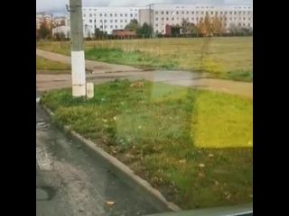Витебск. В траве спокойно отдыхает лис