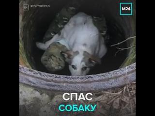 Росгвардеец спас собаку — Москва 24