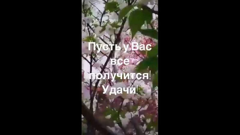 Видео от Людмилы Тхабисимовой