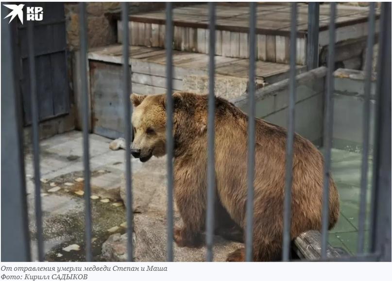 Неизвестные отравили животных в челябинском зоопарке