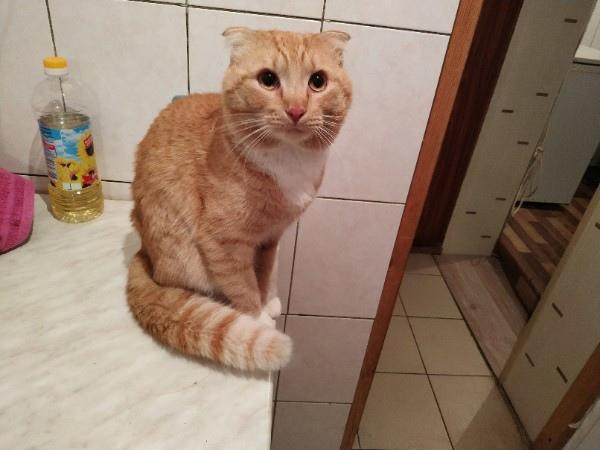 Помогите найти котика! Зовут Арес! 🆘 Живём на ст. Строите...