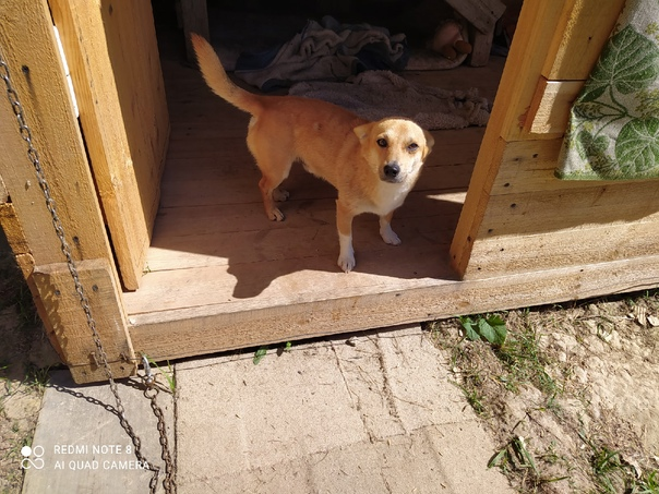 Нужна помощь. Ищу передержку или дом для маленькой собачк...