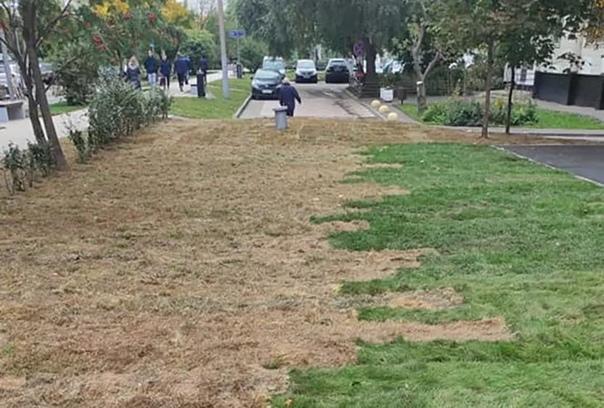 Москвичи пожаловались на укладку «осенней» травы на новые...