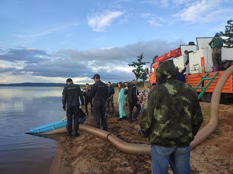 Экологи Быстринского ГОКа выпустили в Шакшу почти 135 тыс. мальков сазана