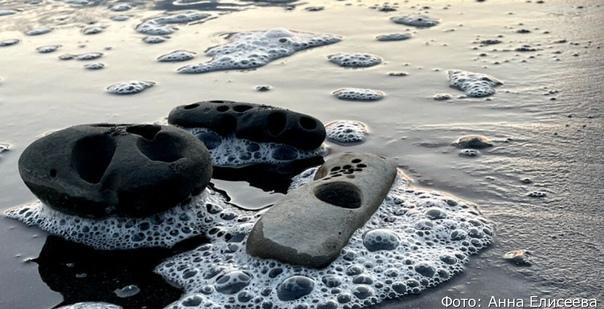 Камчатские учёные рассказали, кто делает круглые о...