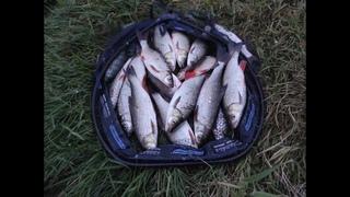 Ловля голавля на реке. Подуст на реке. Вечерняя рыбалка на Днепре.