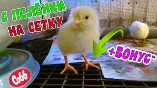 🐥В каком возрасте перевожу цыплят на СЕТКУ. Содержание суточных цыплят. Дела в хозяйстве +бонус😉